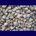 Washed Arabica Coffee S13 Grade 2