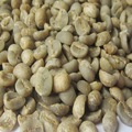 Washed Arabica Coffee S16 Clean